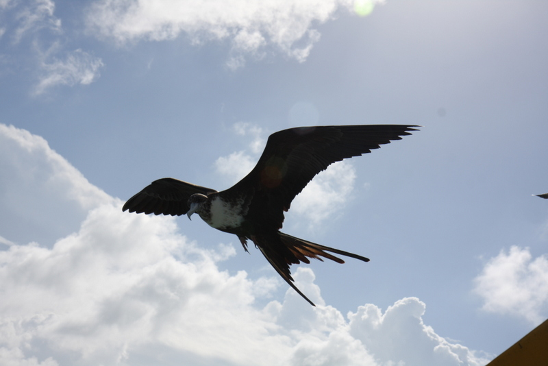 I swear they have pterodactyls here in Belize