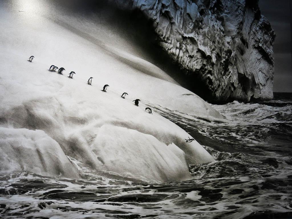 penguins! (© Sebastião Salgado)