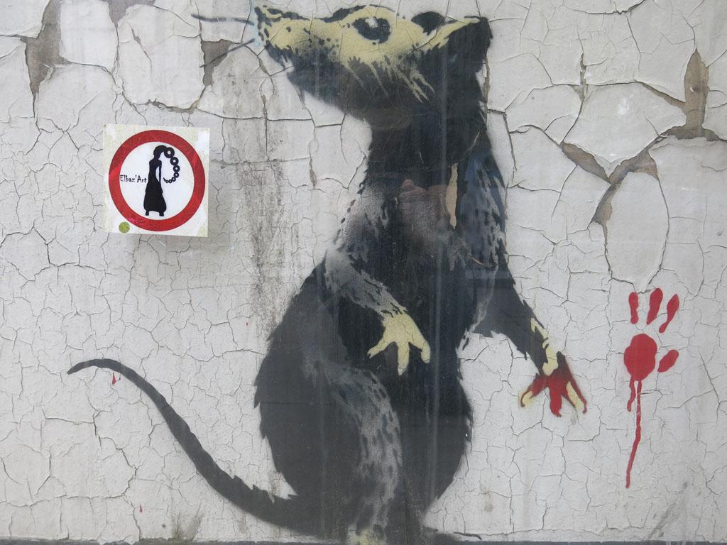 classic rat
