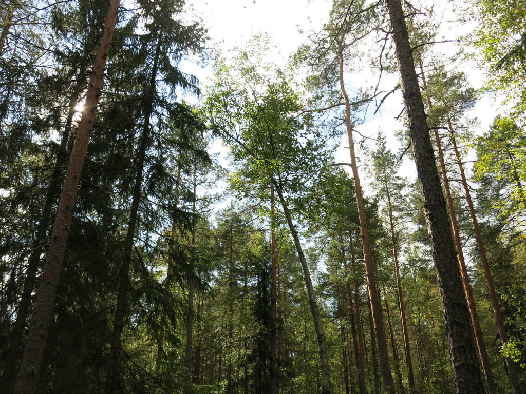 Nuuksio National Park