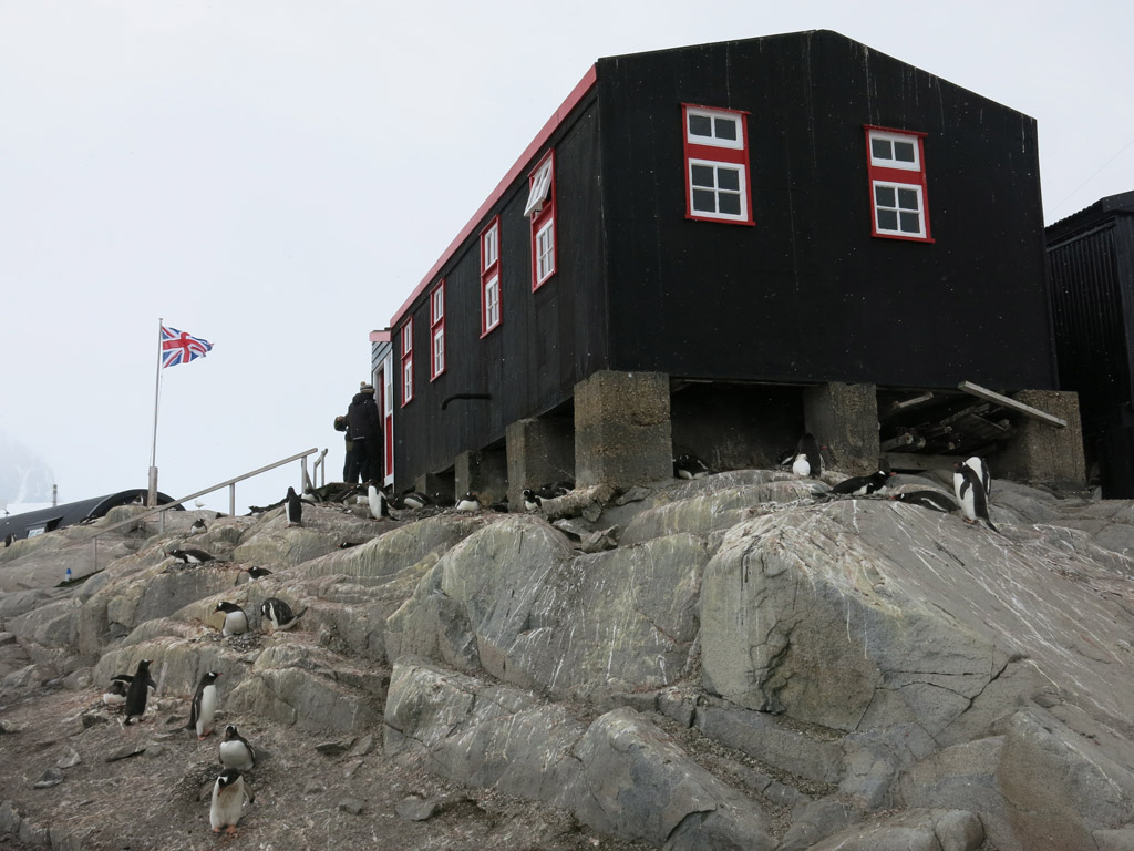 penguins make port lockroy home too