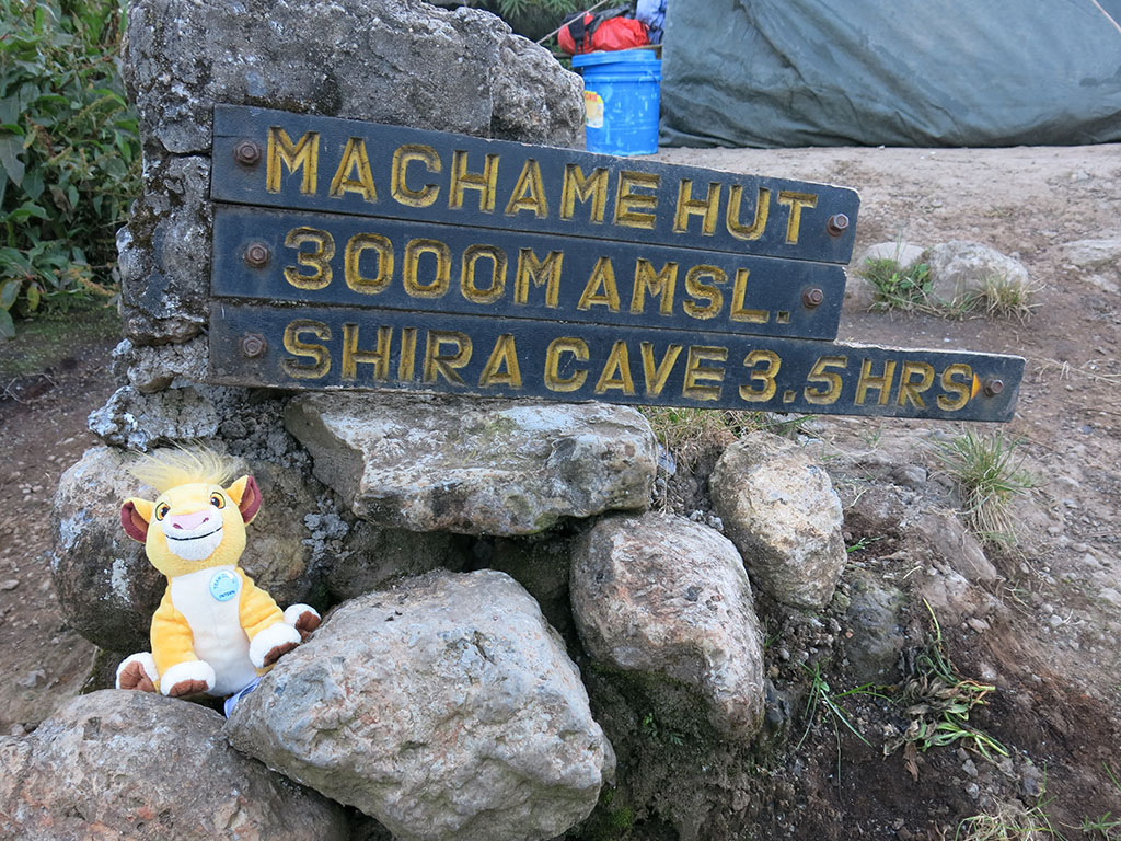 simba started hiking kilimanjaro! here was his first camp.
