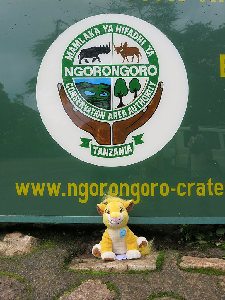 simba says goodbye to ngorongoro crater and africa
