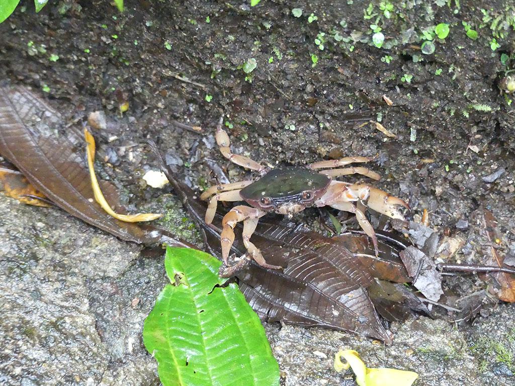 yep, there was a crab in the jungle