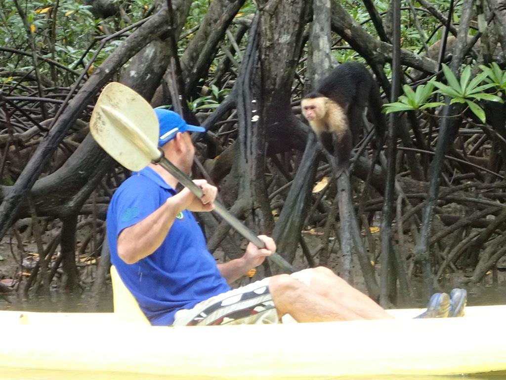 feisty monkey